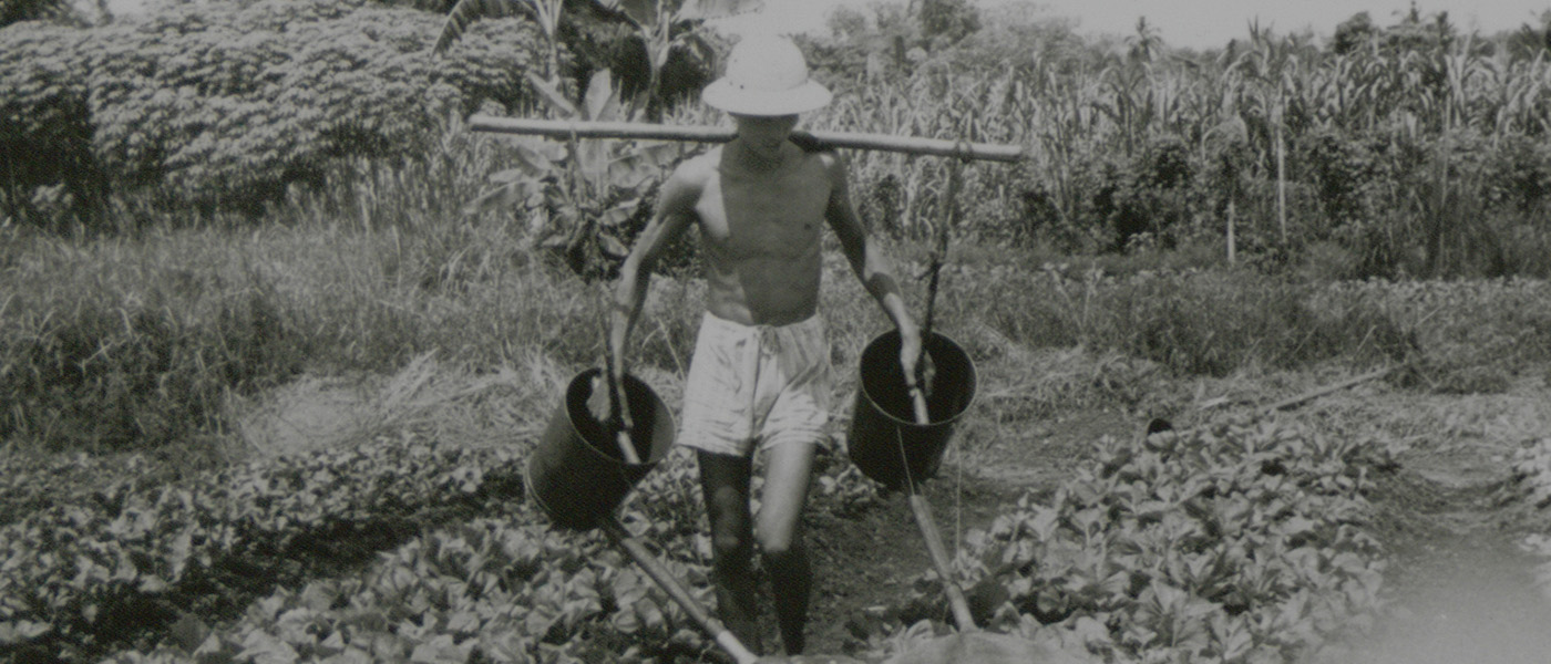 In the 1960s, traditional methods of vegetable gardening were followed, such as the preparation of raised beds, elaborate procedures of sowing, morning-and-evening watering, and frequent hand weeding.