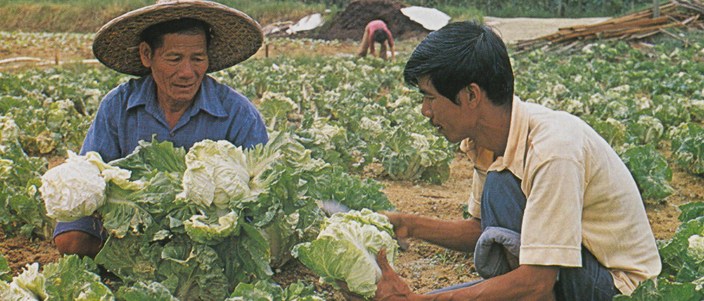The majority of Singapore's farmers were engaged in intensive market gardening of fresh vegetables.