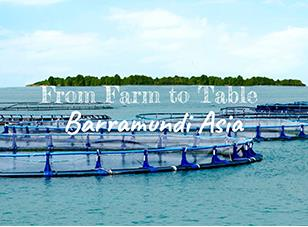 Singapore's Modern Farms Series: Barramundi Asia