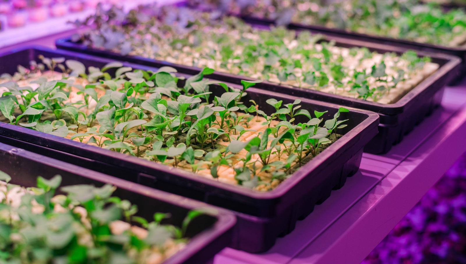 Fertile futures — agritech in SG